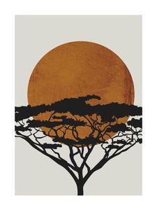 Acacia Sun  Affiches Designs graphiques