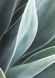 Agave Agave  Prints Botanical prints