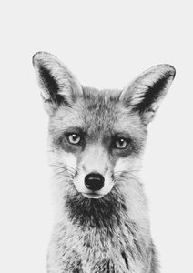Animal Front Fox  Poster Tiere und Insekten
