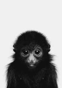Animal Front Monkey  Poster Tiere und Insekten