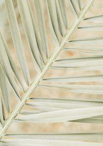 Autumn Palm  Posters Fotokonst