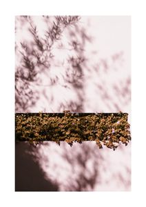 Autumn Shadow  Posters Fotokonst