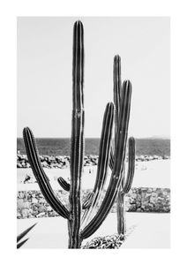 Beach Cactus BW  Posters Nature prints