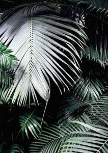 Big Palm Leaves  Prints Nature & Scenery