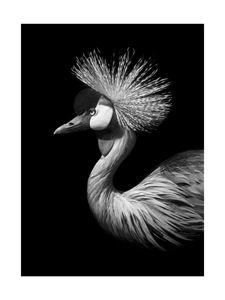 Black Crane  Prints Black & White Photography
