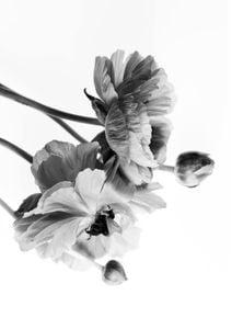 Blossom In BW  Posters Svartvita posters