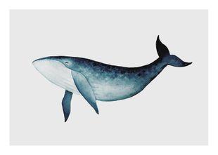 Blue Whale  Poster Tiere und Insekten