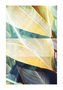 Bossa Nova  Prints Botanical prints