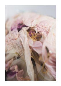 Bouquet 1  Posters Botaniska Motiv