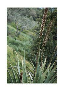 Coastal Garden  Prints Nature & Scenery