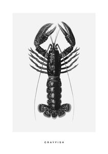Crayfish  Prints Kitchen