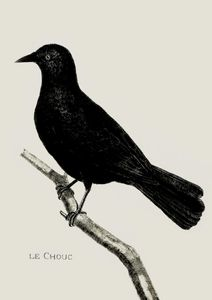 Crow Illustration  Prints Vintage