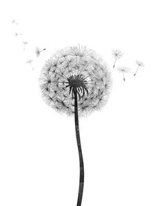 Dandelion  Affiches Les Incontournables