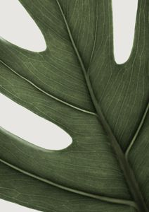 Deep Green Monstera  Prints Nature & Scenery