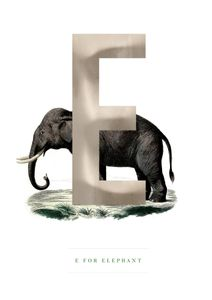 E For Elephant  Poster Tiere und Insekten