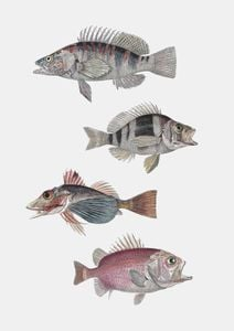 Exotic Fishes  Prints Vintage