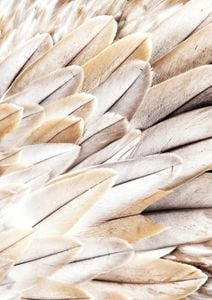 Feather Beige  Posters Bestsellers