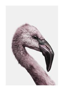 Flamingo Portrait  Poster Tiere und Insekten