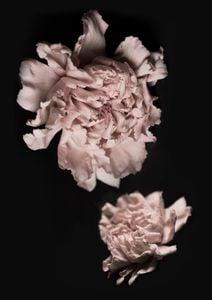 Flowers In The Dark  Posters Natur & Landskap