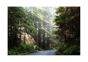 Forest Road  Prints Nature & Scenery