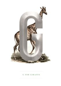 G For Giraffe  Prints Kids Prints
