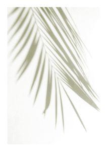 Golden Palm Shadow  Prints Botanical prints