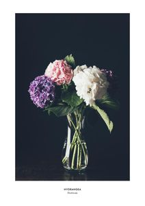 Hydrangea Vase  Prints Botanical prints