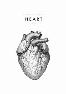 Illustration Of The Human Heart  Affiches Illustrations