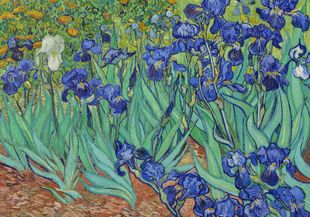 Irises By Van Gogh  Prints New In