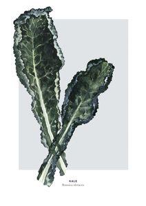 Kale  Prints Kitchen