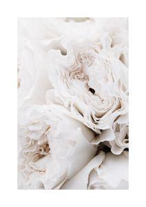 Limestone Roses  Poster Neuheiten