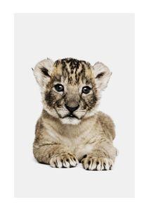 Lion Cub Portrait  Poster Tiere und Insekten
