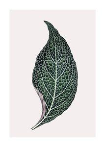 Lone Leaf  Prints Botanical prints