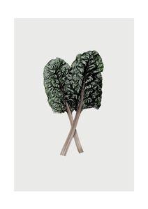 Mangold_leaf  Posters Botaniska Motiv