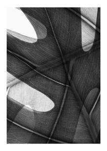 Monstera Camo  Prints Black & White Photography