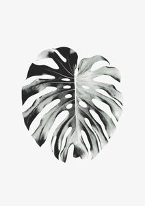 Monstera Leaf  Poster Botanik