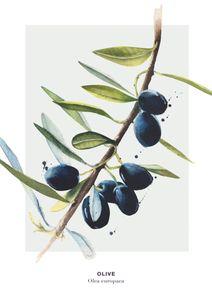Olive 2  Prints Kitchen