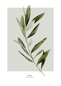 Olive  Prints Bestsellers