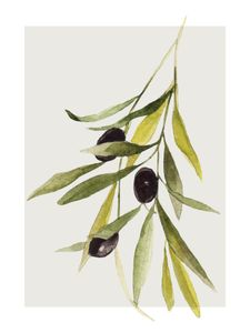 Olives  Prints Graphical prints