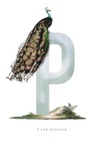 P For Peacock  Posters Posters för barn