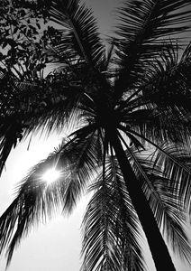 Palm And Sun  Posters Natur & Landskap