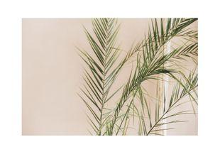 Palm Gold  Prints Photography