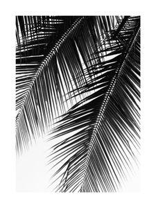 Palm Graphic  Prints Black & White Photography