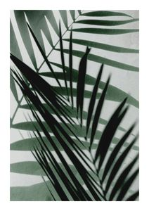 Palm Shadow Reflection  Prints Botanical prints