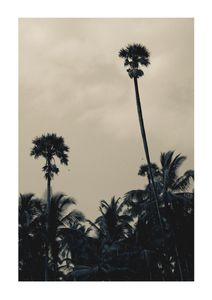 Palms In Bad Weather  Affiches Photographies