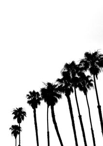 Palms In High Contrast  Posters Svartvita posters