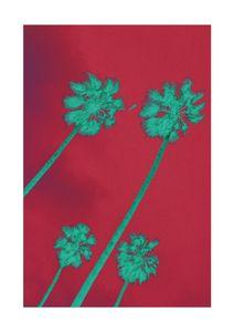 Palms Inverted  Posters Grafiska motiv