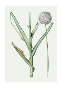 Pastel Botanic 1  Posters Botaniska Motiv