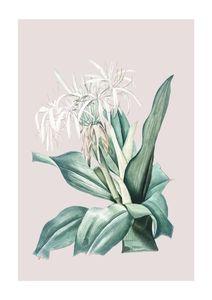 Pastel Botanic 2  Posters Botaniska Motiv
