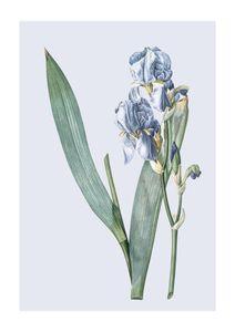 Pastel Botanic 3  Prints Botanical prints